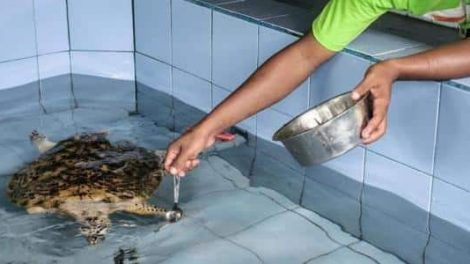 Turtle Conservation and Education Centre