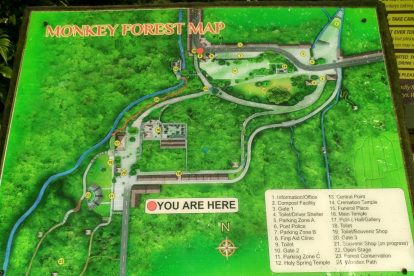 Monkey Forest 00003