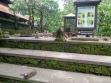 Monkey Forest 00016