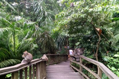 Monkey Forest 00018