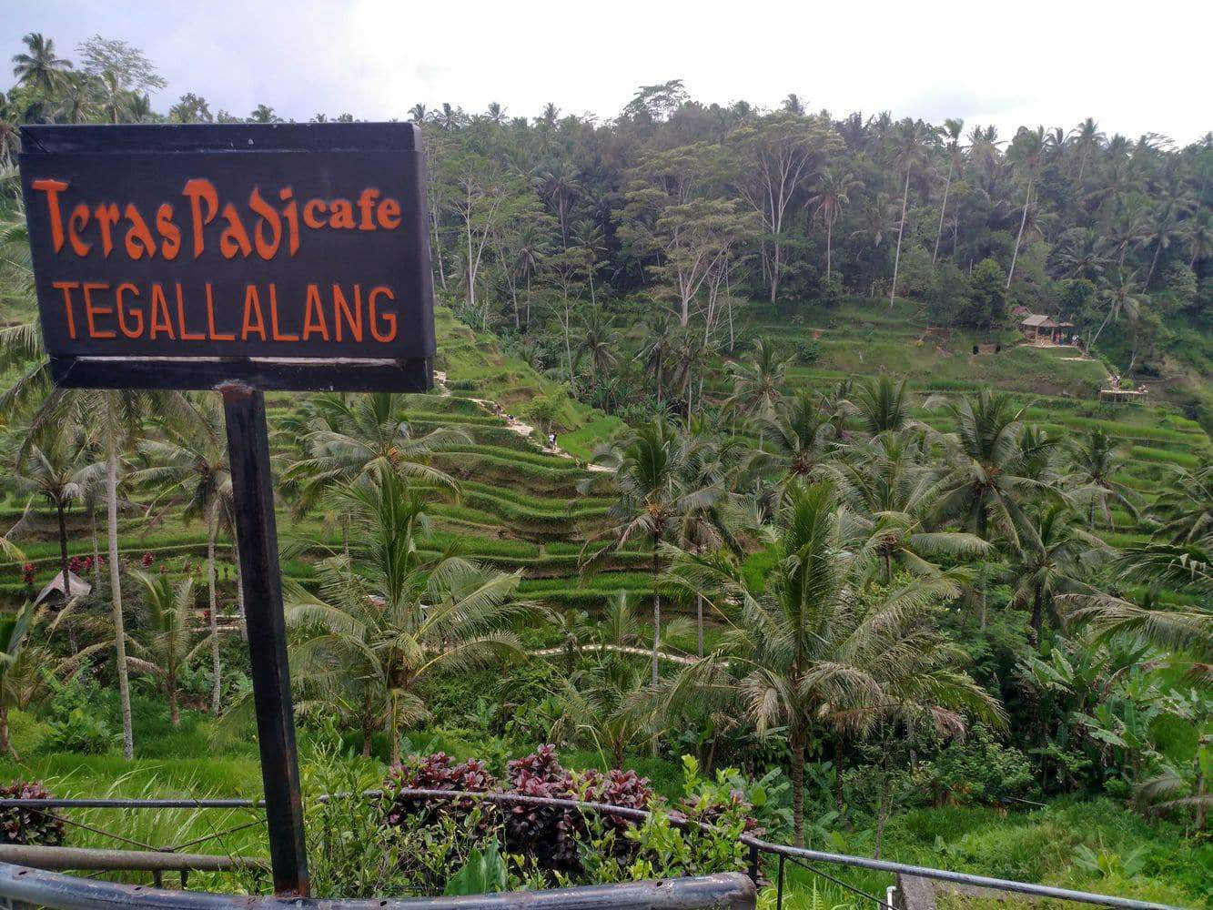 Tegallalang Rice Terrace 00010