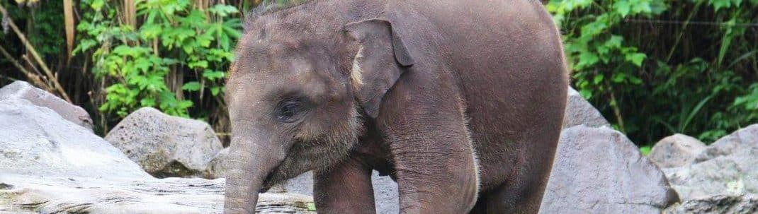 Bali Elephant Park-featured