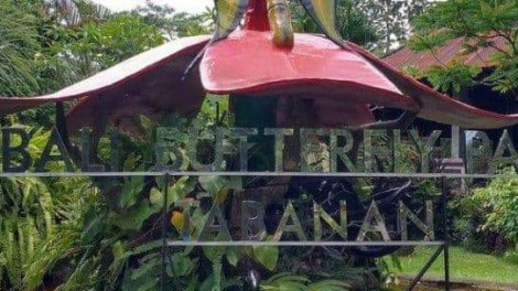 Bali Butterfly Park-featured